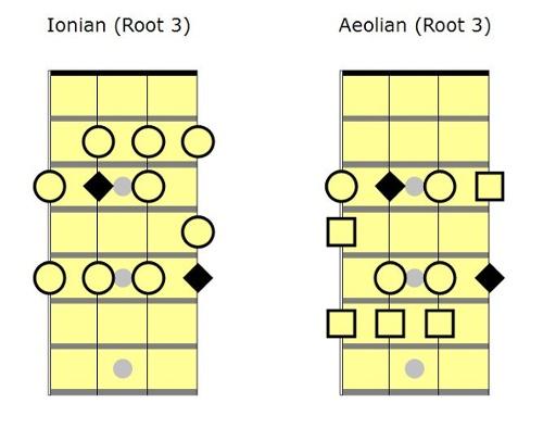bass_root_31.jpg